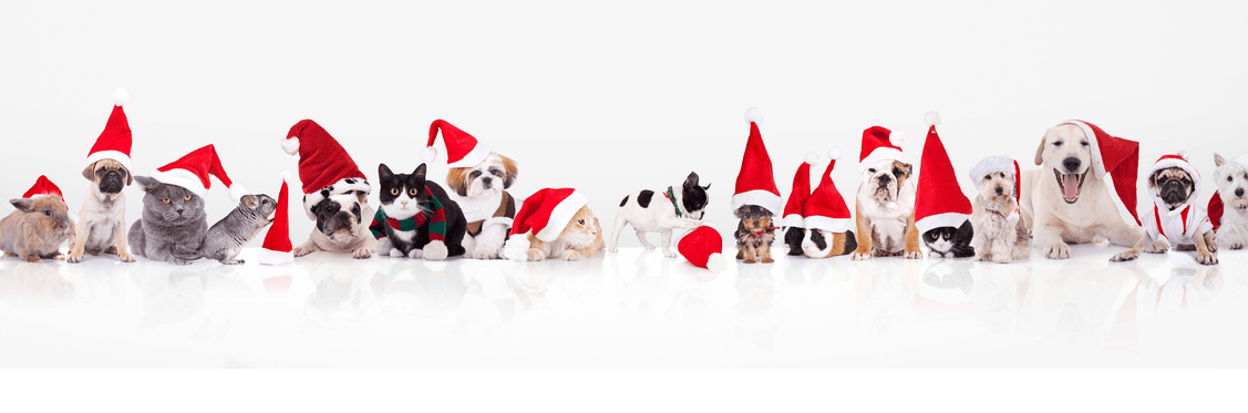 Picture of animals lined up with santa holiday hats
